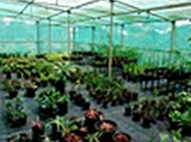 Green house for indoor plants